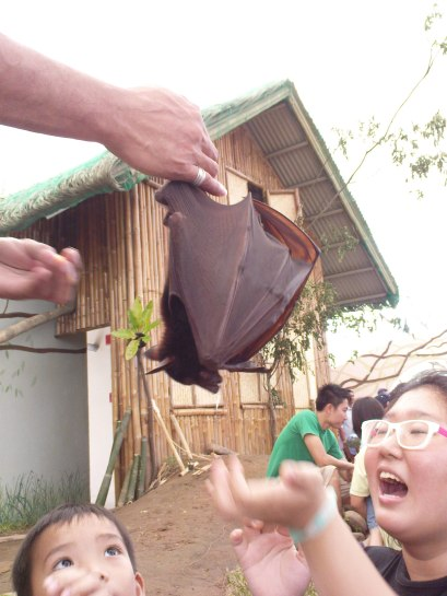 An intelligent bat who performed some tricks for us. :)